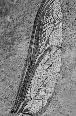 Canon Digital Art - Dragon Fly Wing by Susan Stone