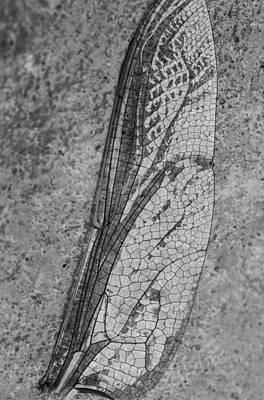 Dragon Fly Digital Art - Dragon Fly Wing by Susan Stone