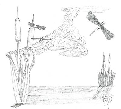 Drawing - Dragonflies And Cattails - Sketch by Robert Meszaros