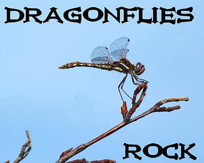 Photograph - Dragonflies Rock by Ben Upham III