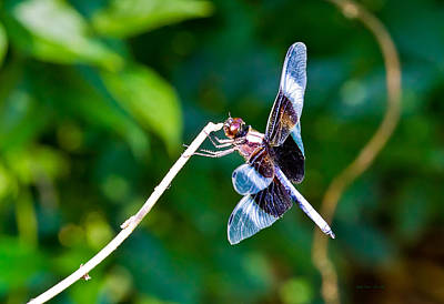 Photograph - Dragonfly 0001 by Barry Jones