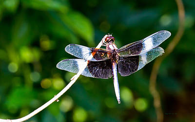 Photograph - Dragonfly 0002 by Barry Jones
