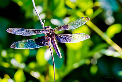 Dragonfly Photograph - Dragonfly 0003 by Barry Jones
