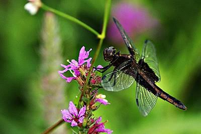 Photograph - Dragonfly 1 by Joe Faherty
