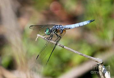 Photograph - Dragonfly 2 by Erica Hanel