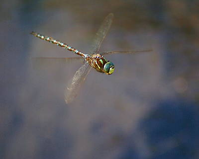 Photograph - Dragonfly 2012 by Ben Upham III