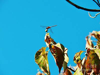 Photograph - Dragonfly 3 by Judy Via-Wolff