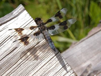 Photograph - Dragonfly by Angi Parks