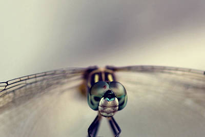 Dragonfly Photograph - Dragonfly Art by Joel Olives