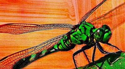 Digital Art - Dragonfly by Carrie OBrien Sibley