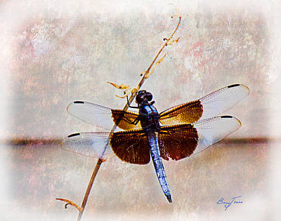 Dragonfly Clinging Art Print by Barry Jones
