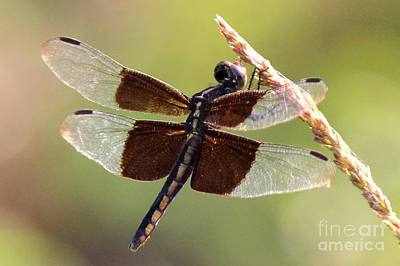 Art Print featuring the photograph Dragonfly Closeup by Kathy  White