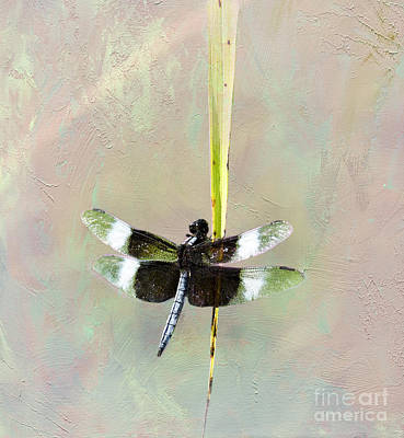 Black Skimmers Photograph - Dragonfly Devotion by Betty LaRue