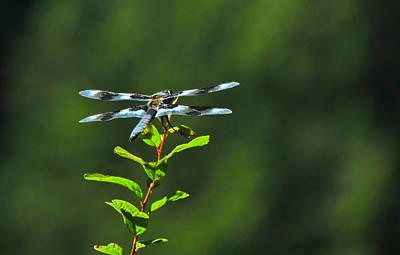 Photograph - Dragonfly by Eva Kondzialkiewicz