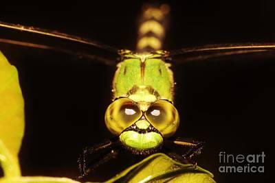 Photograph - Dragonfly Eyes by Lynda Dawson-Youngclaus