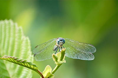 Art Print featuring the photograph Dragonfly Face by Mary McAvoy