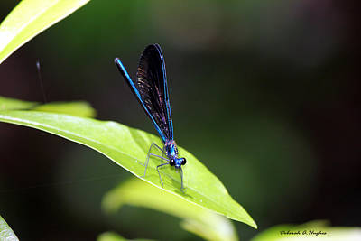 Photograph - Dragonfly Fly by Deborah Hughes