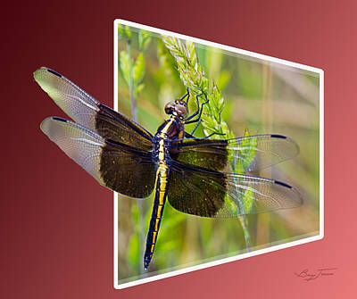Insect Photograph - Dragonfly Holding On by Barry Jones