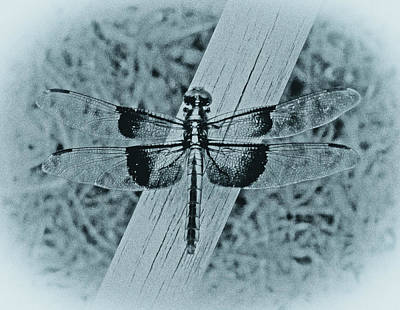 Photograph - Dragonfly In Cyan by Tony Grider