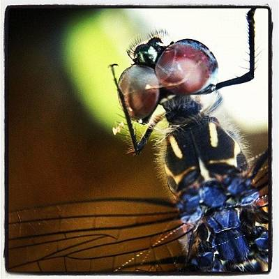 Macro Photograph - Dragonfly In Web by Dave Edens