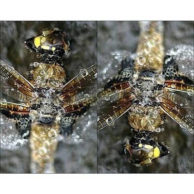 Dragonfly #iphonesia #instagood Art Print
