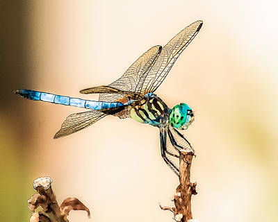 Digital Art - Dragonfly by Jim Proctor