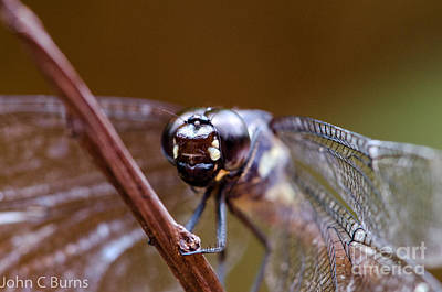 Photograph - Dragonfly by John Burns
