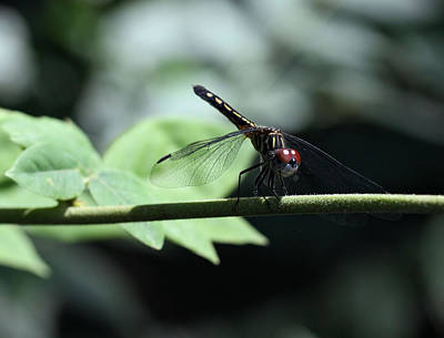 Photograph - Dragonfly by Katherine White