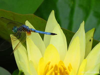 Duke Gardens Photograph - Dragonfly On Lily by Vijay Sharon Govender