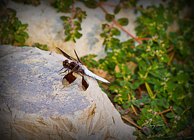 Insect Photograph - Dragonfly On The Rocks by Barry Jones