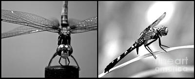 Photograph - Dragonfly One Diptychs by Ken Frischkorn