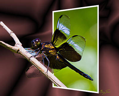 Dragonfly Photograph - Dragonfly Portal 002 by Barry Jones