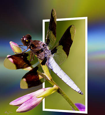 Photograph - Dragonfly Portal by Barry Jones