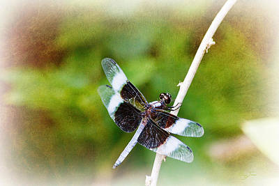 Photograph - Dragonfly Respite 002 by Barry Jones