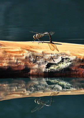 Photograph - Dragonfly Shadow by Cathie Douglas
