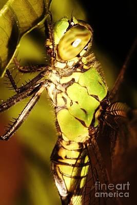 Photograph - Dragonfly Side by Lynda Dawson-Youngclaus