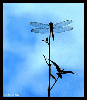 Digital Art - Dragonfly Silhouette by Grace Dillon