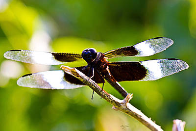Dragonfly Photograph - Dragonfly Stalking by Barry Jones