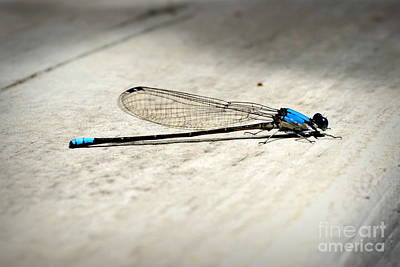 Flutter Photograph - Dragonfly by Nicole Tru Photography