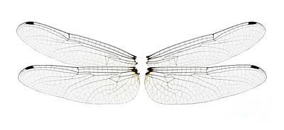 Dragonfly Wings Print by Raul Gonzalez Perez