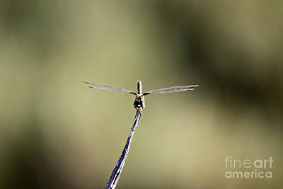 Photograph - Dragonfly With Sunglasses by Shawn Naranjo