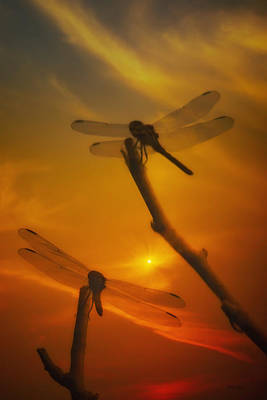 Dragonflys Photograph - Dragonflys In The Sunset by Tom York Images