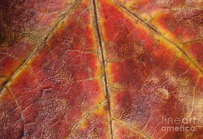 Maple Leaf Art Photograph - Dragon's Breath by Luke Moore