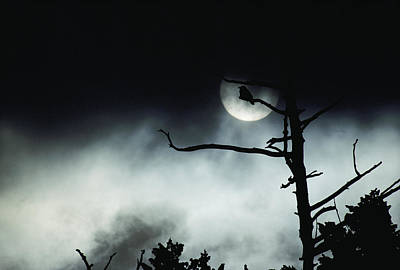 Dramatic Scene Of A Dead Tree Print by Michael S. Quinton