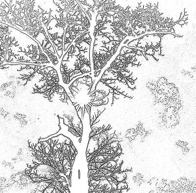 Light Paint Drawing - Drawing Chestnut by Rosane Sanchez