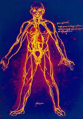 Drawing Of Human Venous System (leonardo Da Vinci) Art Print by Mehau Kulyk