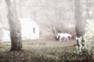 Photograph - Dream Horse by Marianne Campolongo
