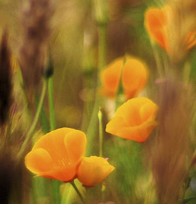Abstract Digital Art Photograph - Dream Poppies by Ralph Vazquez
