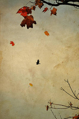 Photograph - Dreaming Of Fall by Emily Stauring