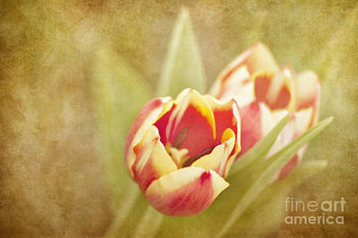 Photograph - Dreaming Of Spring by Cheryl Davis